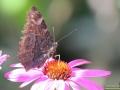 Schmetterling_-01