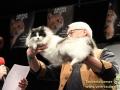 Erfolgsgeschichte-Khalessi-Taubertalperser-Katzenausstellung-15