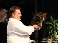 Erfolgsgeschichte-Khalessi-Taubertalperser-Katzenausstellung-19