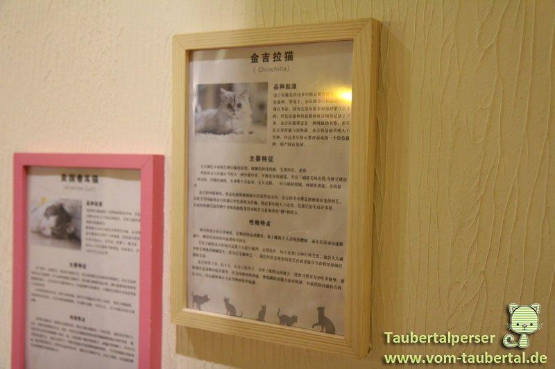 Katzencafe-Beijing-10