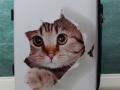 Koffer-Katze-Taubertalperser-00