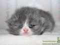 Marshmellow_160817_02