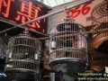 Shanghai-Taubertalperser-Heimtiermarkt-15