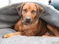 TIERisch-gut-Taubertalperser-Hund-02