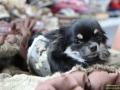 TIERisch-gut-Taubertalperser-Hund