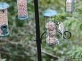 Vogelfutterstation-Taubertalperser-01