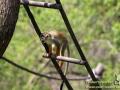 Shanghai-Wild-Animal-Park-Monkey