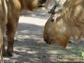 Shanghai-Wild-Animal-Park