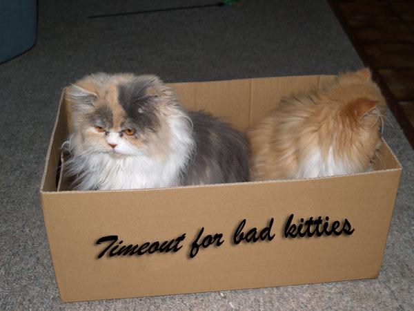 Timeout for bad kitties, Taubertalperser, Karton, Iditha, Dividi