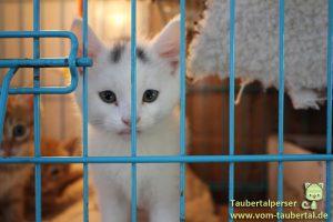 Lea, Taubertalperser, Tierhandel, Welpenhandel