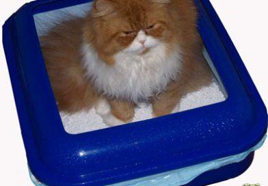 Unsauberkeit bei Katzen: Meine Katze pinkelt überall hin! – Taubertalperser