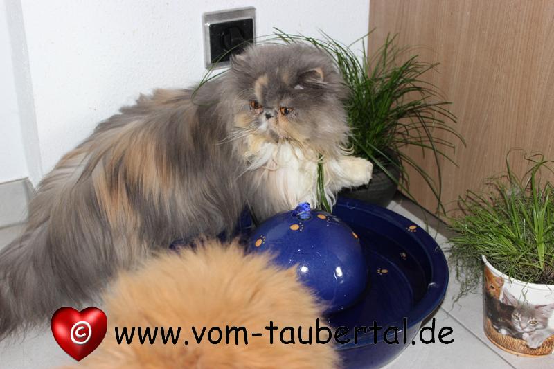 Keramiktrinkbrunnen, Taubertalperser, Keramik im Hof, Katzenblog