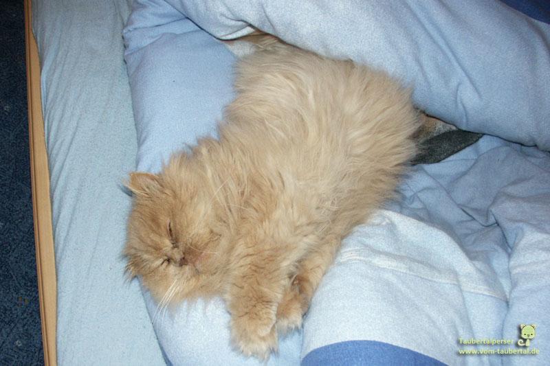 Keno Taubertalperser schläft