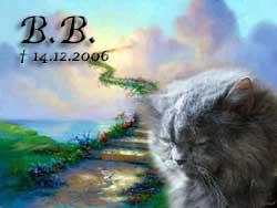 regenbogen_bb