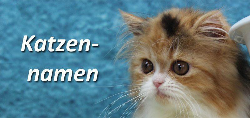 Katzennamen Eine Liste Von Namensideen Fur Mannliche Und