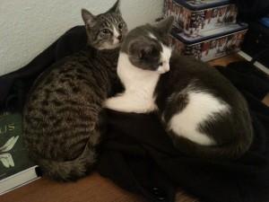 Katzen lieben es zu zweit
