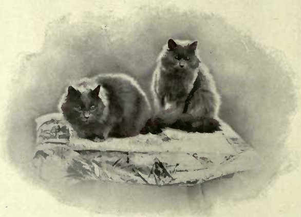KEPWICK VIOLET AND KEPWICK HYACINTH BLUES BELONGING TO THE HON. MRS. MACLAREN MORRISON (Photo: J. R. Clarke, Think)