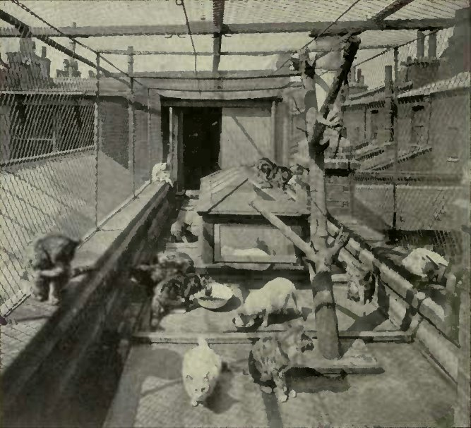 THE CATS PLAYGROUND : ROYAL LONDON INSTITUTION FOR STARVING CATS AT CAMDEN TOWN. {Photo: Cassell & Company. Limited.')
