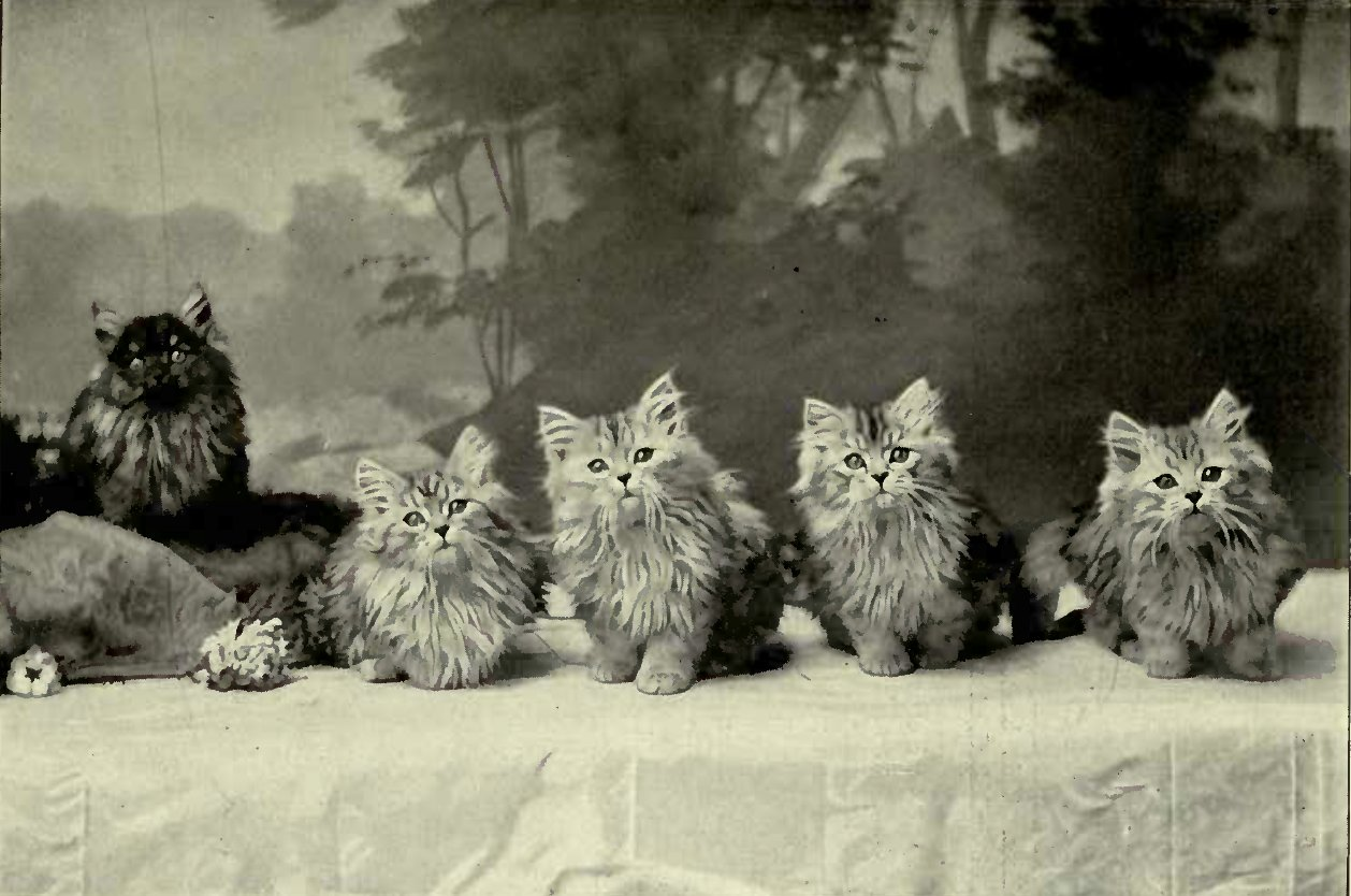 """A GANG OF POACHERS"" - KITTENS BELONGING TO MISS ALLICE DELL (Photo: E. Landor, Ealing)"