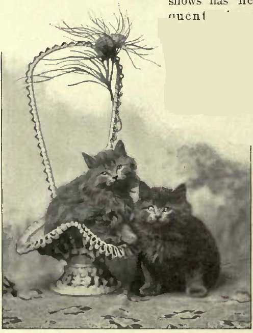 MISS KIRKPATRICK'S BLUE KITTENS (Photo: E. Landor, Eating.)