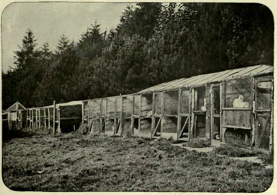 THE HON. MRS. MCLAREN MORRISON'S CATTERY AT KEPWICK.