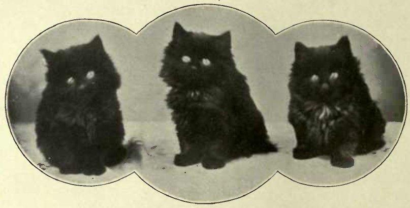 THE CAROL SINGKRS. (Photo : E. Laniior, Ealing.)