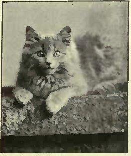 """""""JILL"""" THE PEOTERTY OF Miss BENNETT. (Photo: H. Warschkarski, St. Leonards-on-Sea.)"""