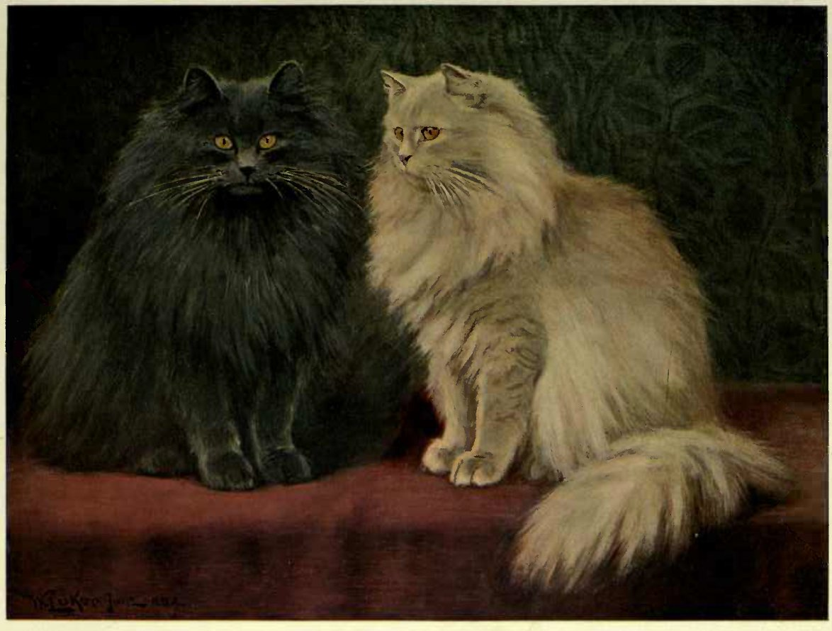 BLUE AND CREAM PERSIANS. (From a Painting by W. Luker, Jun.)