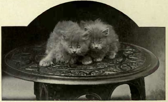 "'' SCARED."" Two BLUES BELONGING TO LADY MARCUS BERESFORD. (Photo : Cassell & Company, Limited.)"