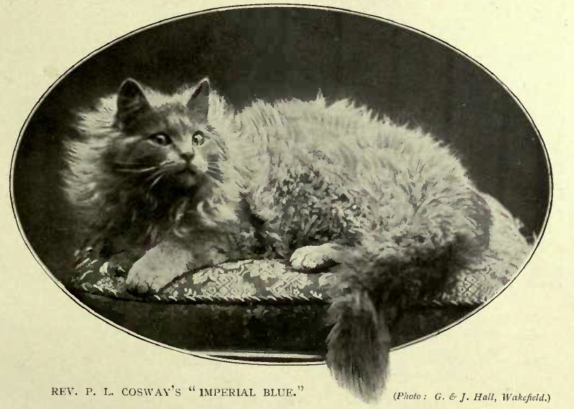 "REV. P.L. COSWAY´S ""IMPERIAL BLUE"". (Photo: G. & J. Hall, Wakefield.)"