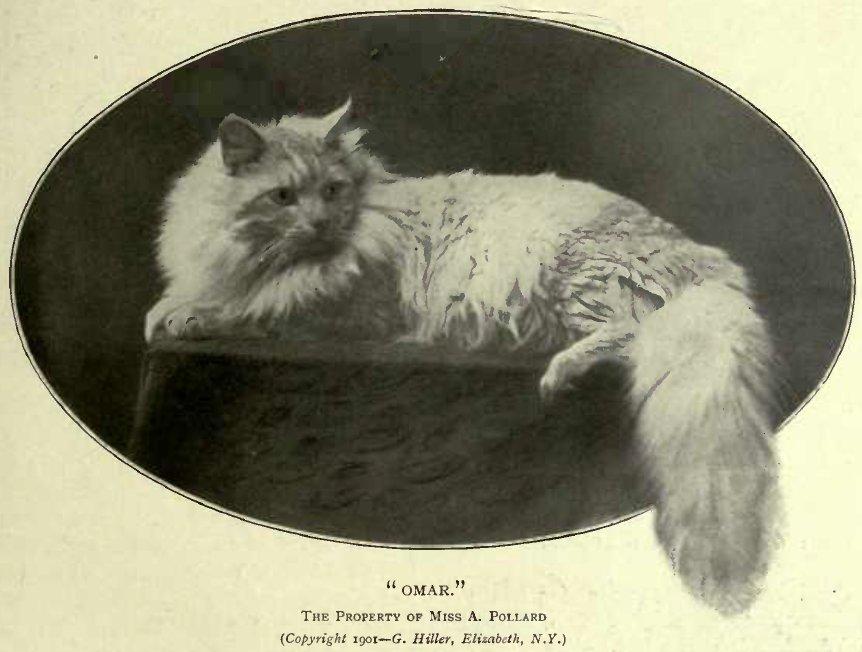 """"""" OMAR."""" THE PROPERTY OF Miss A. POLLARD (Copyright 1901—G. Hiller, Elizabeth, N.Y.)"""
