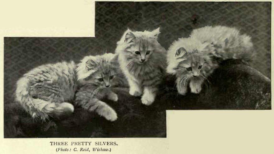 THREE PRETTY SILVERS. (Photo: C. Reid, Wishaw.)