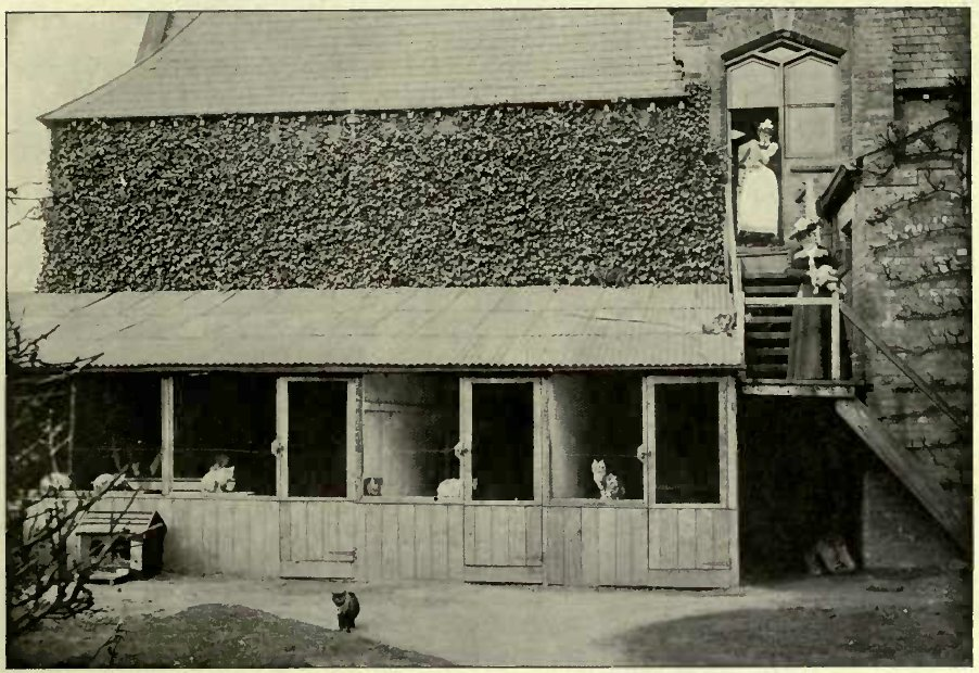 SOUTHERN CATTERY, SHOWING ENTRANCE TO INFIRMARY AND INDOOR CATTERY.
