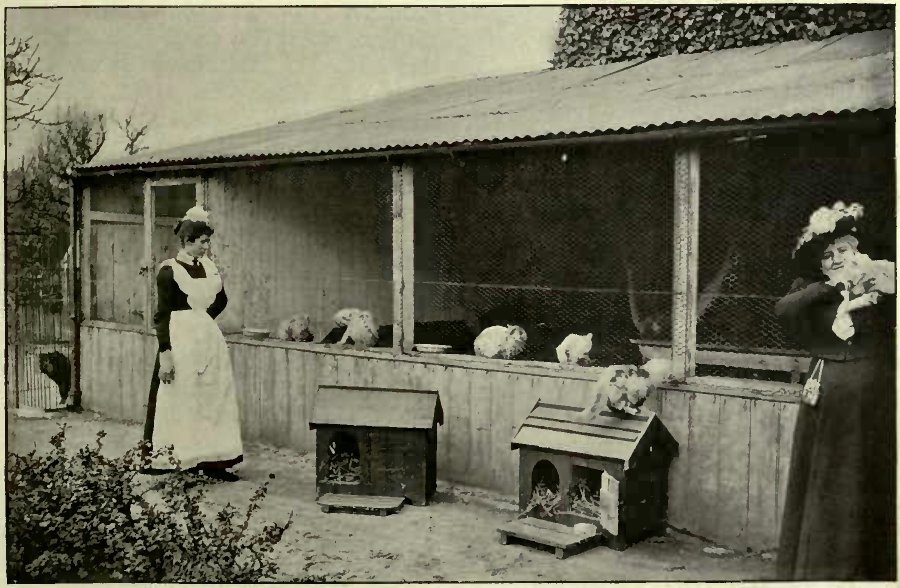 MRS. WALKER VISITING HER PETS. TWO VIEWS OF WOODHEYS CATTERY.