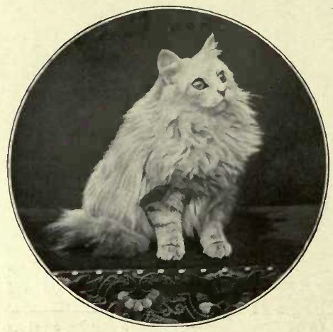 """""""SILVER BLOSSOM"""". OWNED BY MRS. WALKER. (Photo: Findlow & Co., High Wycombe.)"""