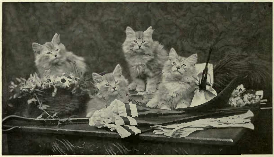 """''FUR AND FEATHER."""" (Photo : Mrs. S. F. Clarke )"""