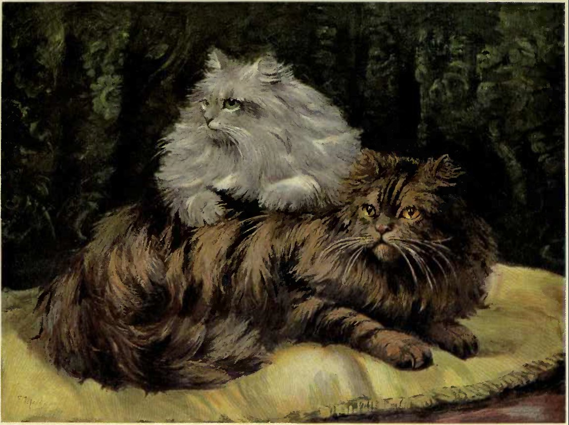 BROWN TABBY AND SILVER PERSIANS. (From a Painting by Miss F. Marks.)