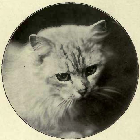 THE ELDER MISS BLOSSOM. SILVER, OWNED BY Miss HORSMAN.