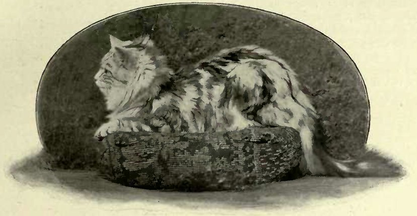"""THE MARQUIS OF DINGLEV."" SILVER TABEY, OWNED BY MISS ANDERSON LEAKE. (Photo: Calle & Company, Limited.)"