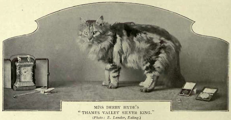 "MISS DERBY HYDE'S ""THAMES VALLEY SILVER KING."" (Photo: E. Lander, Eating.)"