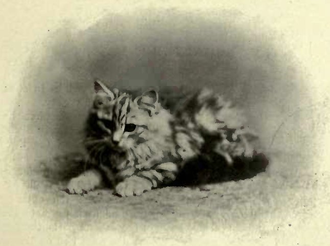 """ROIALL FLUFFBALL"" THE PROPERTY OF MISS COPE. (Photo: E. S. Baker & Son, Birmingham.)"