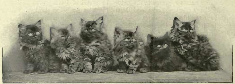 "MRS. STEAD´S SMOLE LITTER BY ""RANJI."" (Photo: Russell & Son, Baker Street.)"