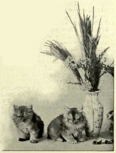 MISS BARTLETT'S TWO SMOKE KITTENS. (Photo: E. Landor, Baling.)
