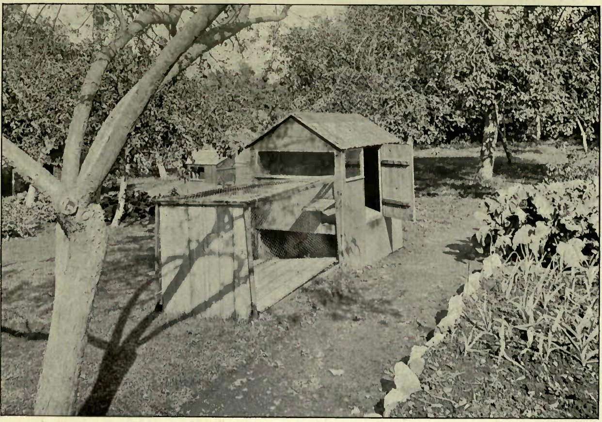 MRS. JAMES´S CAT HOUSE AT BACKWELL. (Photo: F. Holmes, Clinfon, Bristol)