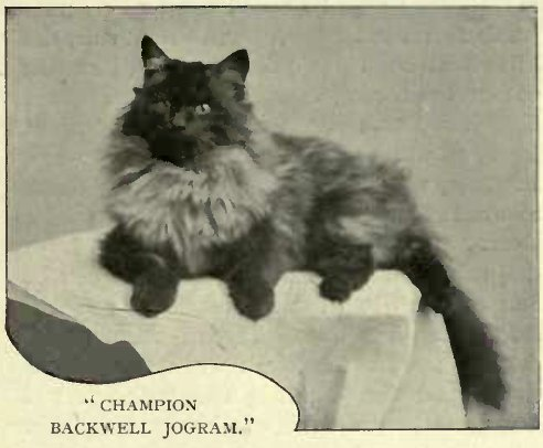 """CHAMPION BACKWELL JOGRAM."""