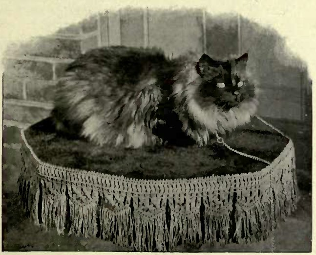 MRS. SINKINS' SMOKE PERSIAN '' TEUFEL.""