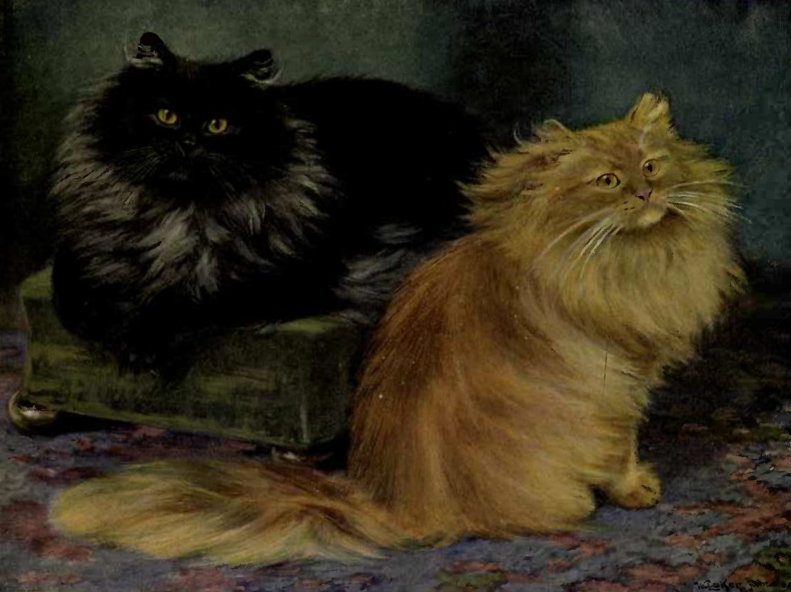 SMOKE AND ORANGE PERSIANS (From a Painting by W. Luker, Jun.)