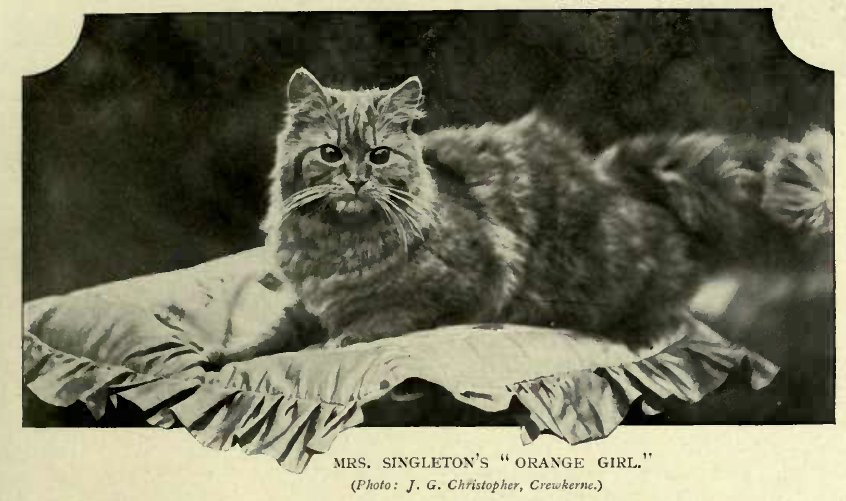 "MRS. SINGLETON´S ""ORANGE GIRL."" (Photo: J. G. Christopher, Crewkerne.)"