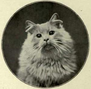 MRS. F. NORRIS´S CREAM KITTEN. (Photo: E. Landor, Ealing.)