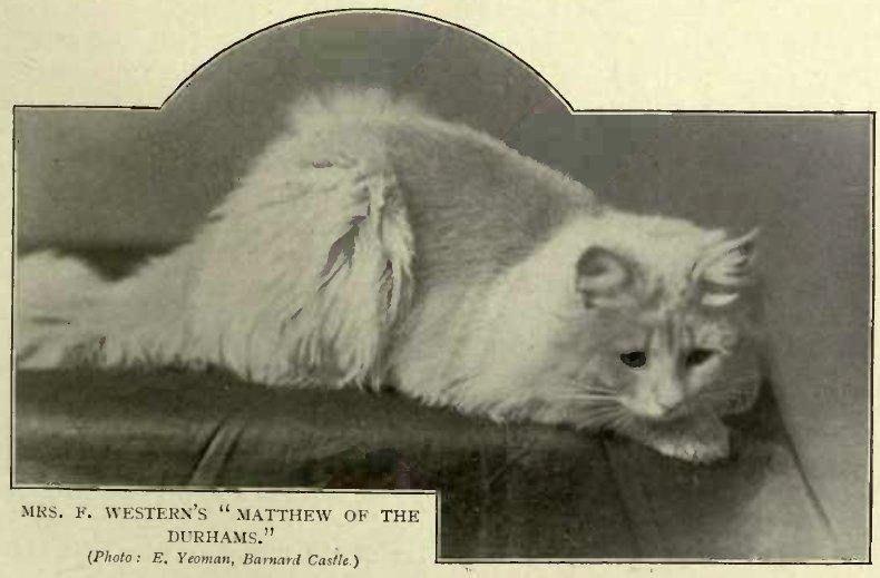 "MRS. F. WESTERN´S ""MATTHEW OF THE DURHAMS."" (Photo: E. Yeoman, Barnard Castle)"